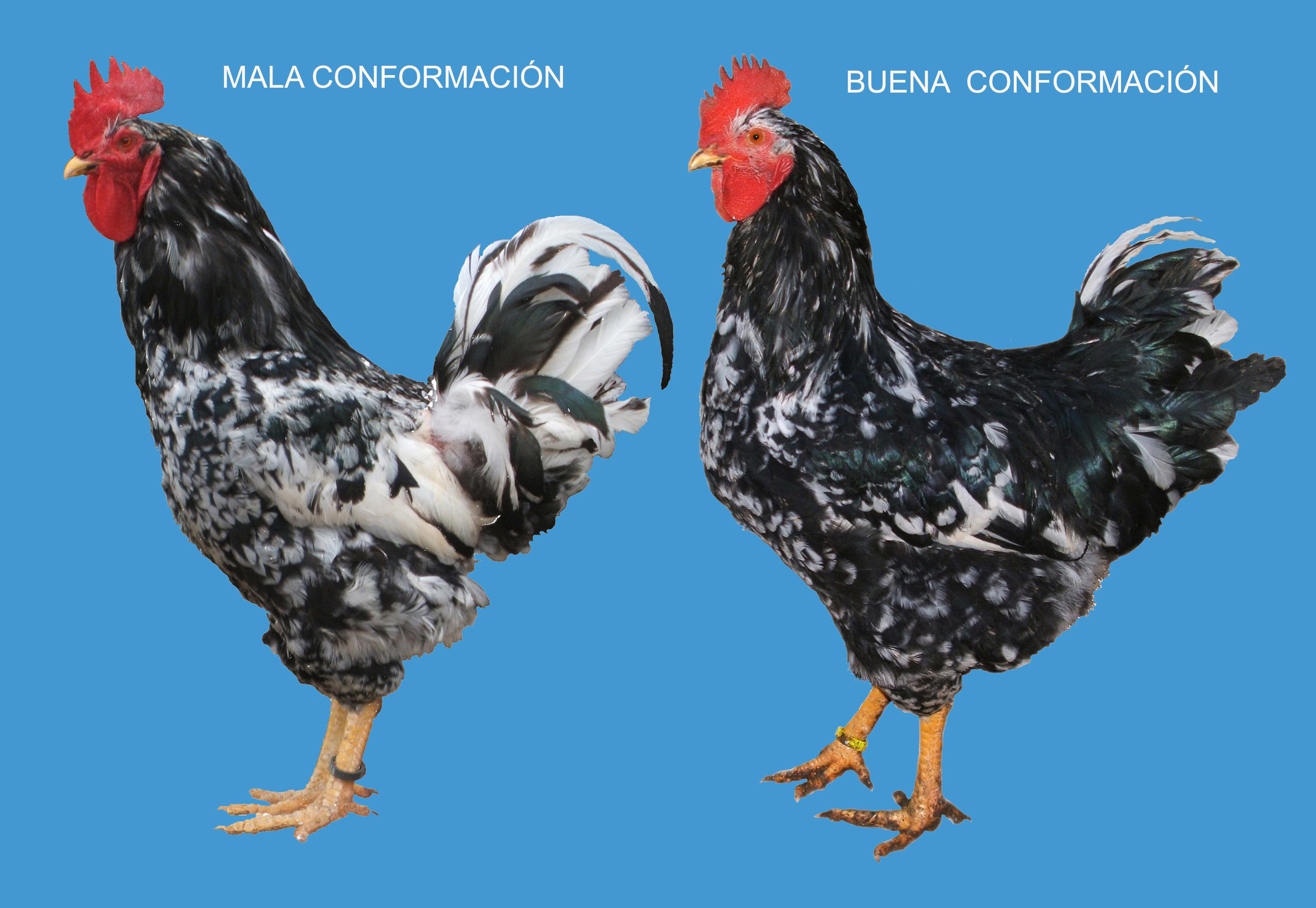 IMG_CONFORMACION 90-2000